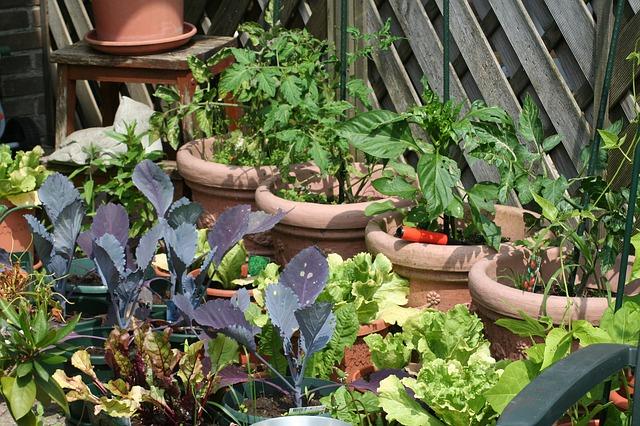 Goedkoop tuin aanleggen